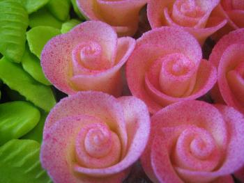 Sprayed Pink Roses